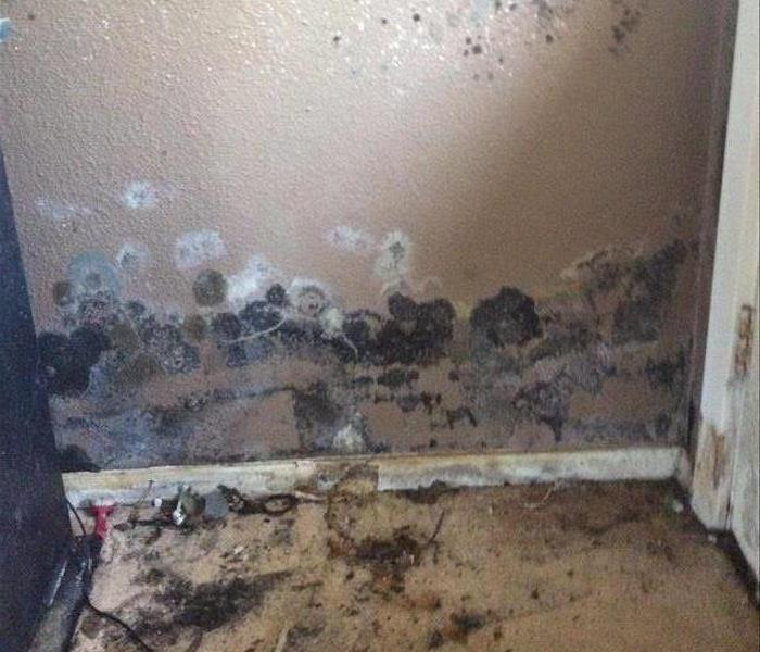 Severe Mold Growth in Palestine, TX, Home