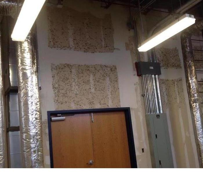 Mold Remediation 3 Steps To Prevent the Spread of Mold